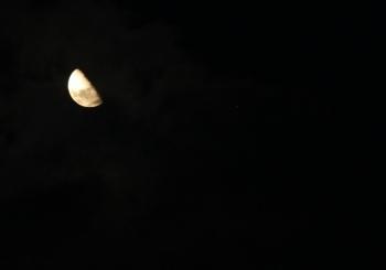 leila dusk 2013 large